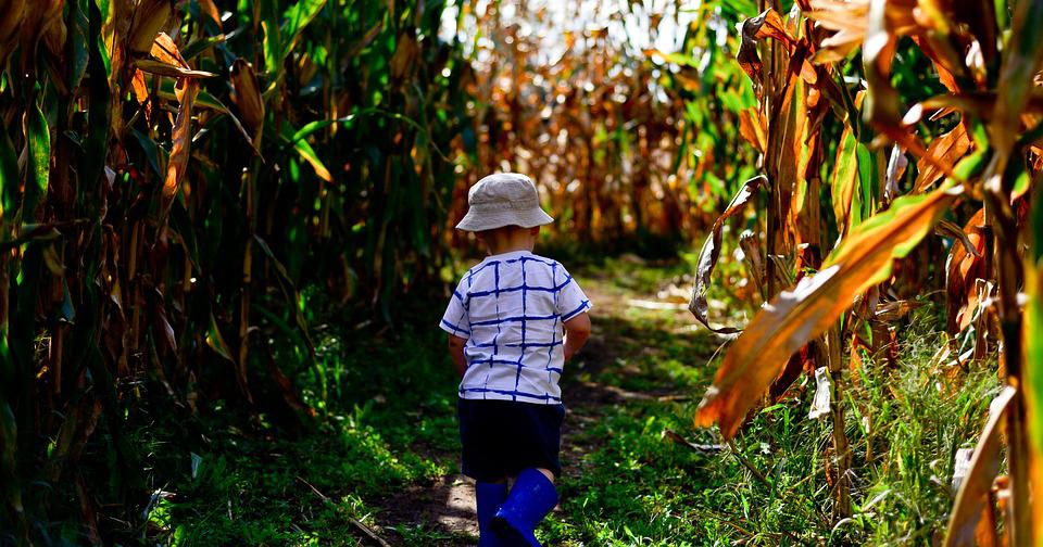 Amazon Adventure Corn Maze